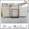 Beautiful Shell Beige Marble Tiles for Floor design(YQN-100602)