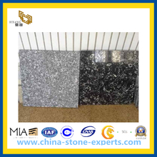 Sea Shell Black Marble Tile & Slab(YQG-MT1018)
